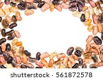 haricot on a white background... | Shutterstock . vector #561872578