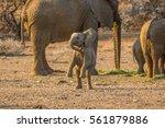 Stock photo baby elephant 561879886