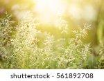 natural abstract soft green... | Shutterstock . vector #561892708