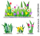 Spring flowers growing in the garden. Crocus, tulips and daffodils isolated on white background. | Shutterstock vector #561898444