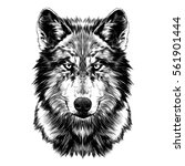 Wolf Face Sketch Vector