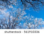 background of snow covered tree ... | Shutterstock . vector #561910336