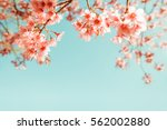 beautiful vintage sakura flower ... | Shutterstock . vector #562002880