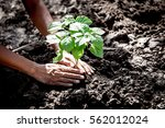 man hand planting young tree on ... | Shutterstock . vector #562012024