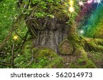 Ancient Mossy Tree In Forest...