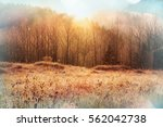 magic misty forest in the... | Shutterstock . vector #562042738
