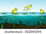 three green frogs on water lily ... | Shutterstock .eps vector #562045294