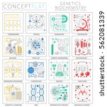 infographics mini concept...   Shutterstock .eps vector #562081339