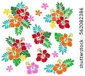 hibiscus flower illustration | Shutterstock .eps vector #562082386