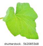 Pumpkin Leaf On A White...