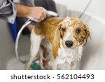 an image of bathing a cute dog | Shutterstock . vector #562104493