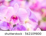 Purple Orchid Flower With...