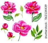watercolor flower set | Shutterstock . vector #562134439