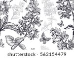 spring flowers seamless floral... | Shutterstock .eps vector #562154479