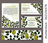 tropical card set for different ... | Shutterstock .eps vector #562156378