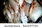 fresh fish sold in the market.   Shutterstock . vector #562197724