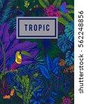 vector card vintage. exotic... | Shutterstock .eps vector #562248856
