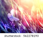 Stock photo beautiful butterfly on flower during sunset 562278193