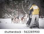 Sledding With Husky Dogs In A...