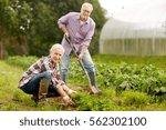 farming  gardening  agriculture ... | Shutterstock . vector #562302100