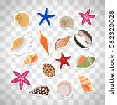 sea shells cute stickers ... | Shutterstock .eps vector #562320028