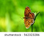 Stock photo closeup butterfly on flower with green background 562323286