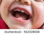 closeup view on open mouth of... | Shutterstock . vector #562328038