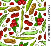beans and nuts pattern. coffee... | Shutterstock .eps vector #562349029