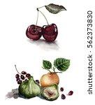 watercolor illustration...   Shutterstock . vector #562373830