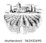 rows of vineyard grape plants... | Shutterstock .eps vector #562432690