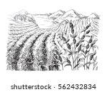 coffee plantation landscape in... | Shutterstock .eps vector #562432834