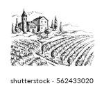 rows of vineyard grape plants... | Shutterstock .eps vector #562433020