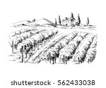 rows of vineyard grape plants... | Shutterstock .eps vector #562433038