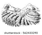 tea plantation landscape in... | Shutterstock .eps vector #562433290