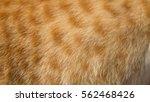cat fur | Shutterstock . vector #562468426