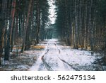 Winter Road   Forest With Pine...