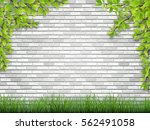 tree branch with green leaves... | Shutterstock .eps vector #562491058