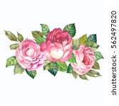 watercolor bouquet of roses | Shutterstock . vector #562497820