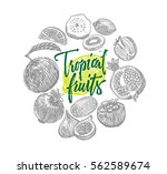 exotic tropical fruits sketch... | Shutterstock .eps vector #562589674