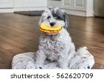Funny Dog With Rubber Hamburger ...
