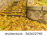 Concrete Stairs In Autumn Park
