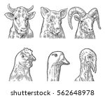 farm animals icon set. heads... | Shutterstock . vector #562648978