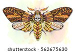 death's head hawkmoth.... | Shutterstock .eps vector #562675630