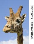 giraffe portrait | Shutterstock . vector #56269651