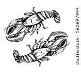 Sketch Illustration Of Lobster...