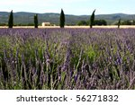 Lavendal field in Provence, France (Shallow DOF) - stock photo