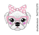 cute pug portrait with pin up... | Shutterstock .eps vector #562731370
