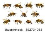 group of bee or honeybee in... | Shutterstock . vector #562734088