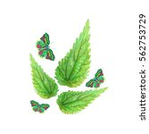 colored nettle leaves and... | Shutterstock .eps vector #562753729