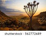 quiver tree   spitzkoppe ... | Shutterstock . vector #562772689